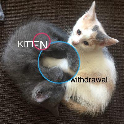 Kitten Withdrawal